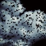 dark birds rev 2