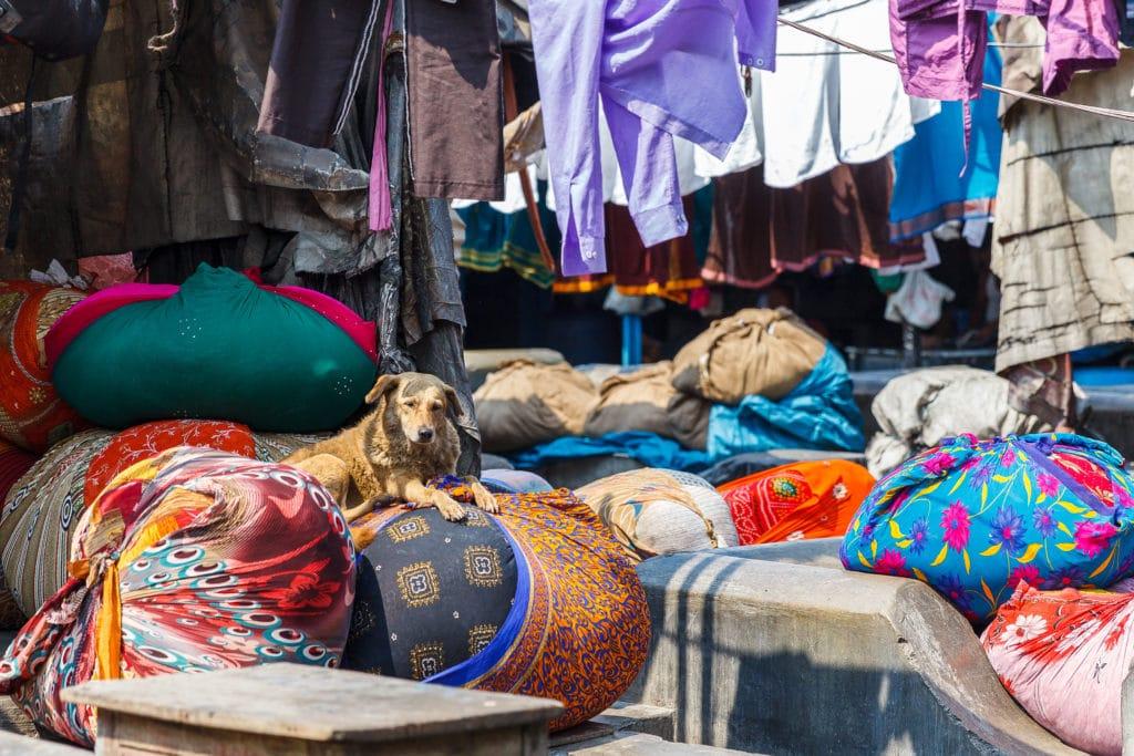Dog at Dhobi Ghat: Mumbai, India's Laundry Slum